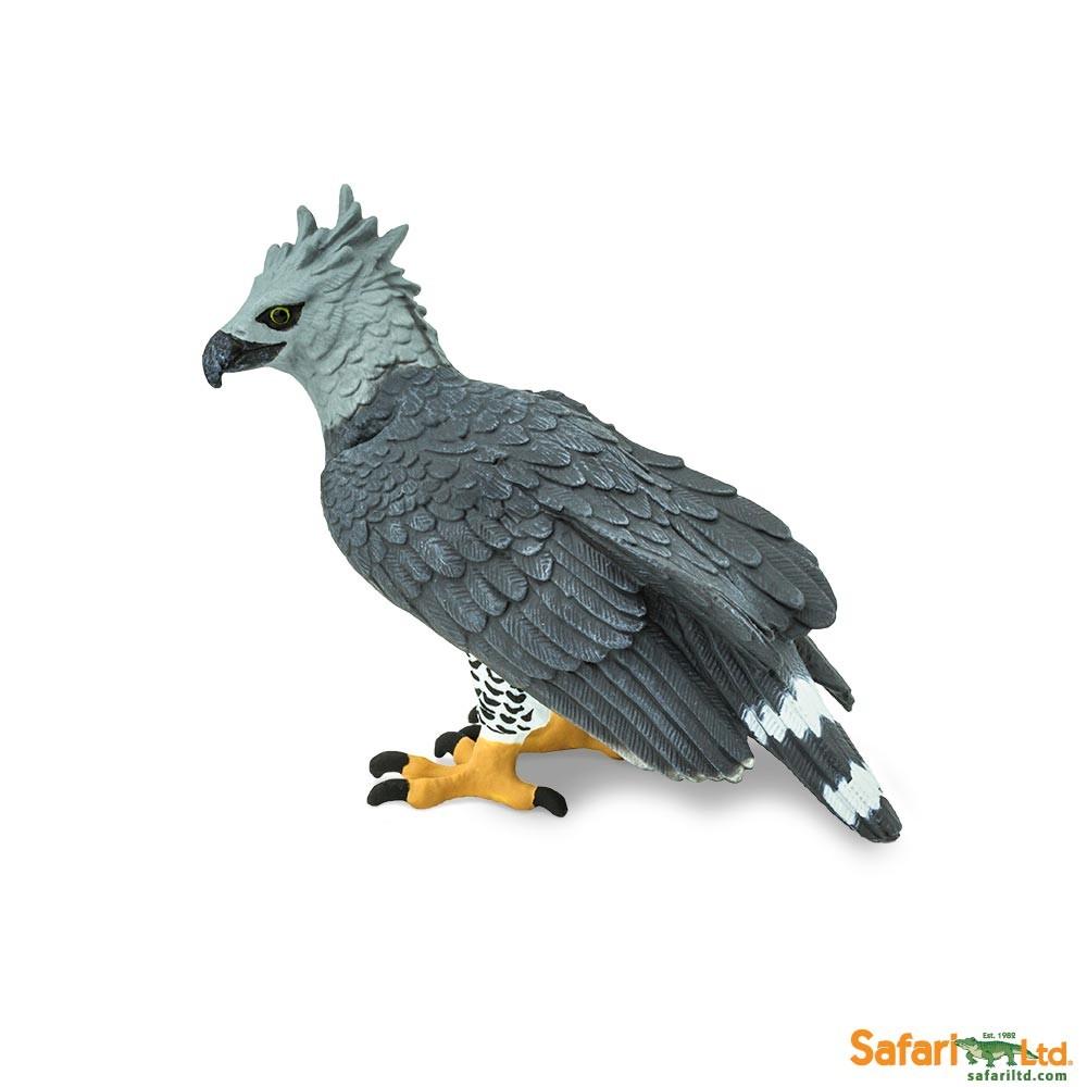 Safari 150929 Harpyie